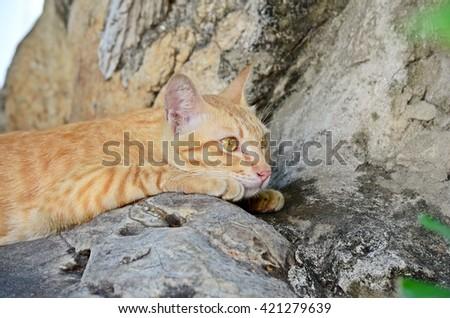 yellow eyed cat lying on the stone, lazy tabby - stock photo