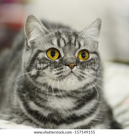 Yellow eyes. Cute  kitten  - stock photo
