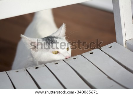 Yellow eyes white cat sniffing and peeking head behind the old white rocking chair, young playful cat on the deck, cat playing outside at home,