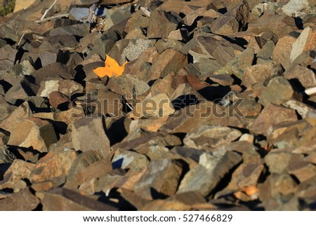 Yellow fall leave trapped on the rocks