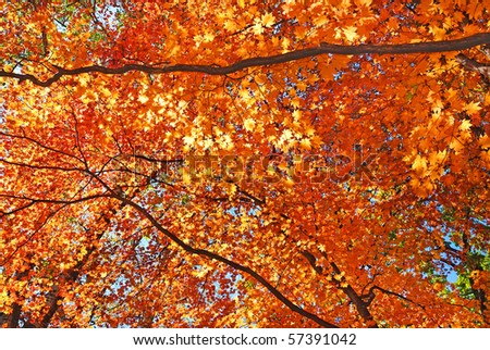 yellow fall maple leafs illuminated background