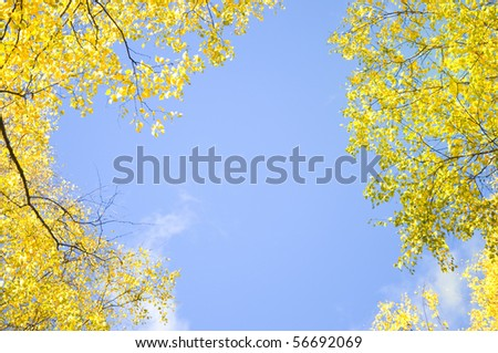 yellow fall maple leaves natural background frame - stock photo