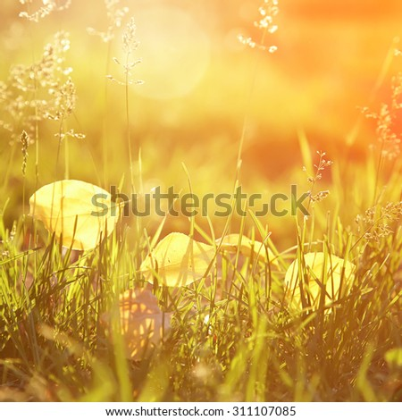 yellow fallen leaves lie on the grass. autumn nature background - stock photo
