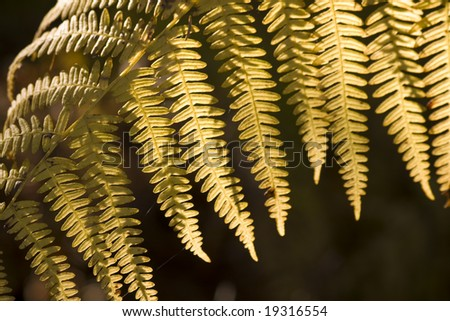 Yellow fern in autumn