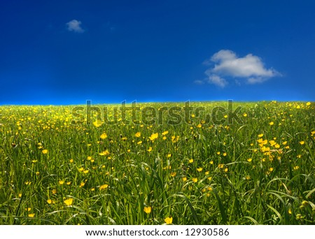 Yellow field against deep blue sky