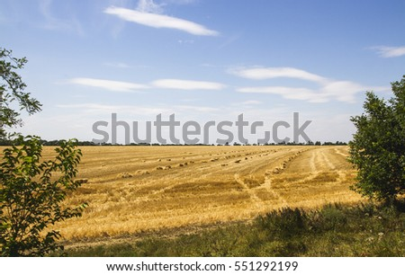 Yellow field and blue sky.