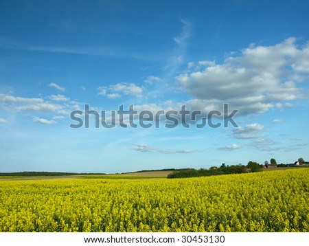 Yellow field and dark blue sky with fluffy clouds