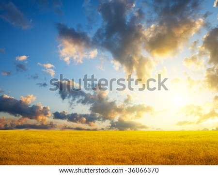 yellow field and sunset