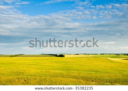 Yellow field, crop and the dark blue sky.