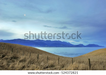 Yellow field in dusk with shore of Ohau Point Seal Colony, Kaikoura, New Zealand