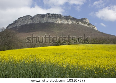 Yellow field of colza in a typical landscape of south of France - stock photo