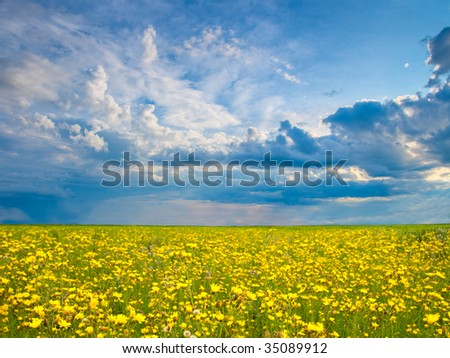 yellow field of flowers with beautiful skies