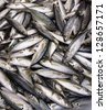 Yellow Fin Fishes in the market - stock photo