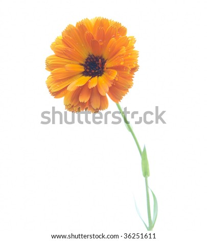 Yellow flover over white background