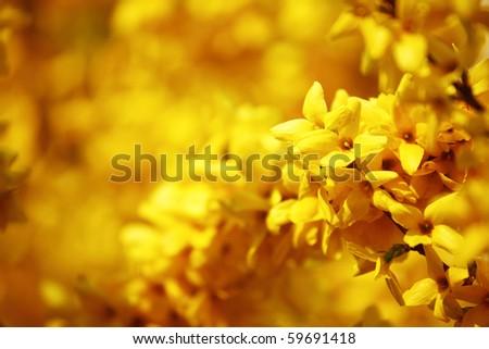 yellow flower - stock photo