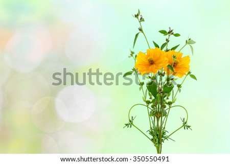 yellow flower and small tree on nature background