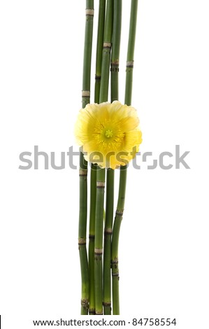 yellow flower and thin bamboo grove