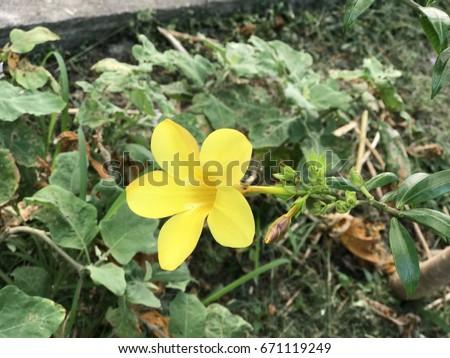 Yellow mountain flower beautiful flower 2017 mountain flower etsy mightylinksfo Images