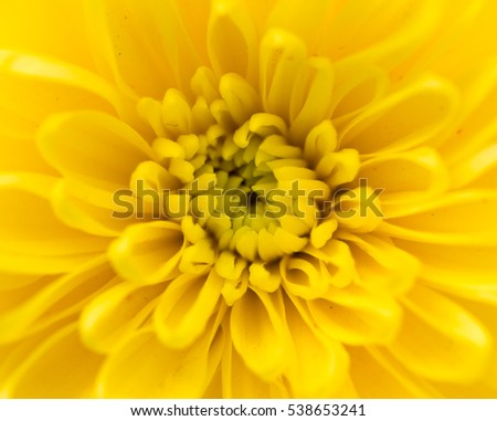 Yellow flower as a background