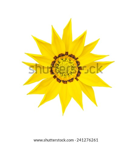 Yellow flower as close up on isolate background - stock photo