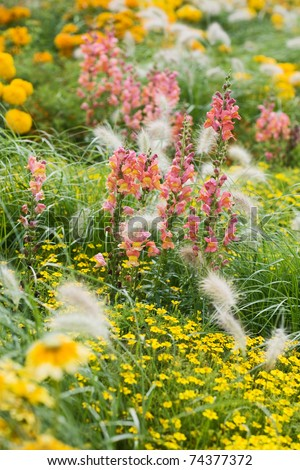 Yellow flower bed with Snapdragons, Echinacea, Tagetes and grass - stock photo