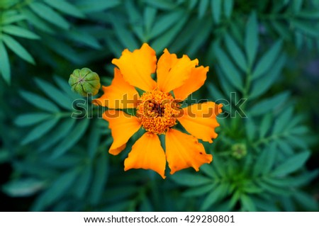 yellow flower bloom with green leaf - stock photo