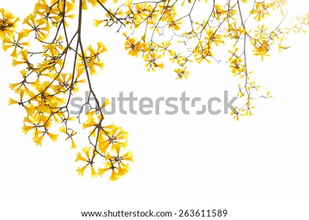 Yellow flower blooming in spring season - stock photo