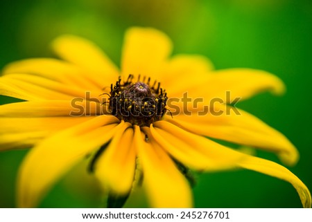 yellow flower d - stock photo