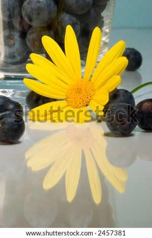 Yellow flower daisy over reflection surface and blueberries inside clear glass over aqua paper background