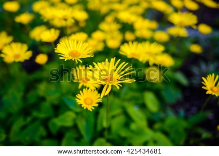 Yellow flower for background - stock photo