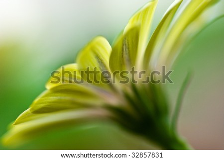 Yellow flower from an ant's point of view - stock photo