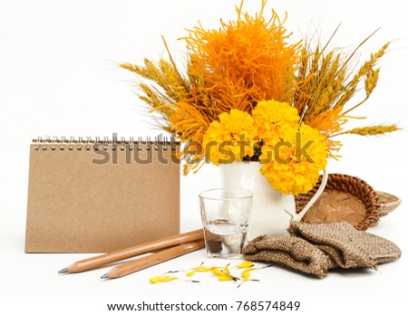 yellow flower in a white vase on white background