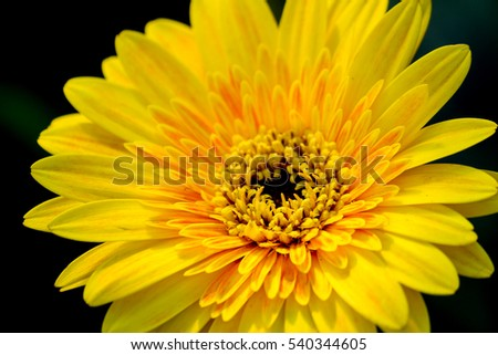yellow flower in garden.