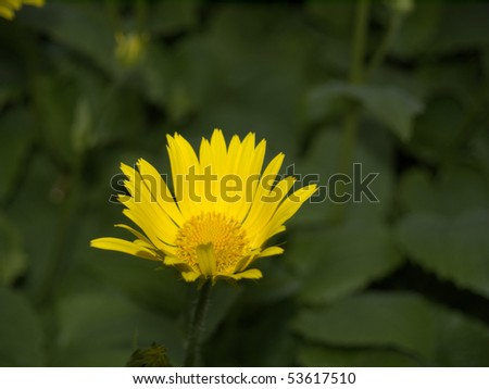 yellow flower in green background - stock photo