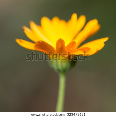 yellow flower in nature - stock photo