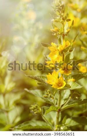 yellow flower in nature - stock photo