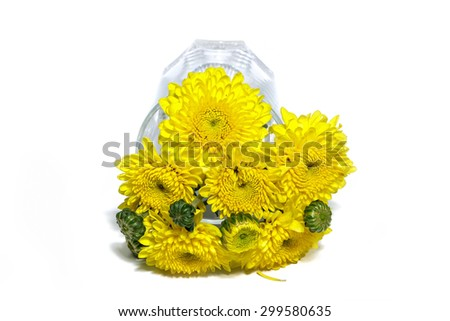 yellow flower in vase, isolated on white background - stock photo