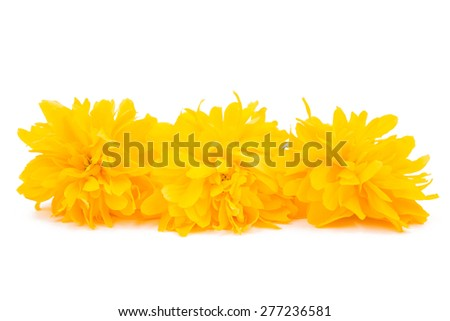 yellow flower on a white background