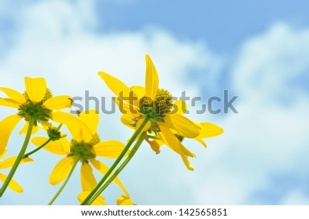 yellow flower on blue sky. - stock photo