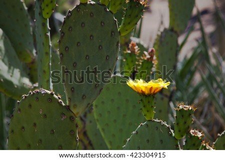 Yellow flower on cactus