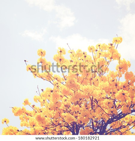 Yellow flower on the top of tree with retro filter effect - stock photo