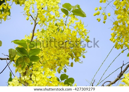 Yellow flower on tree:Close up,select focus with shallow depth of field:ideal use for background. - stock photo