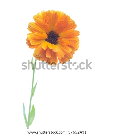 Yellow flower over white background