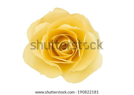 Yellow flower paper - stock photo