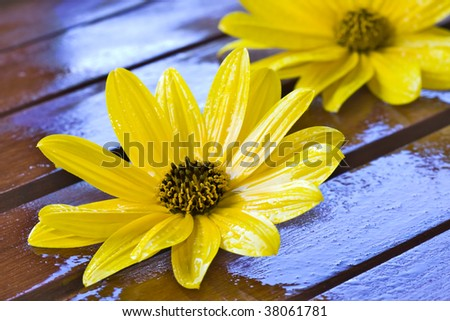 yellow flower, stone and wood