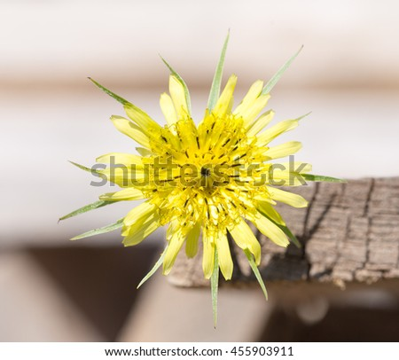 yellow flower top view - stock photo