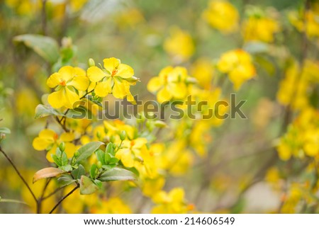 Yellow flower tree in autumn - stock photo