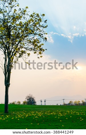 Yellow flower tree with blue sky sunset background