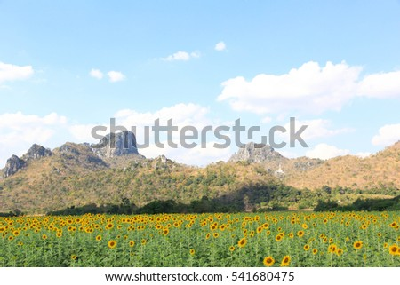 Yellow flower with green leaf on blue sky and mountain at behind