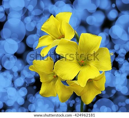 yellow flowers - stock photo